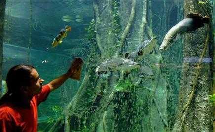 Abrió el acuario más grande de Sudamérica