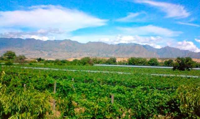 La Riojana Coop. concretó su 75° vendimia