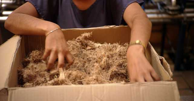 Ford desarrolla bioplástico basado en fibra de agave