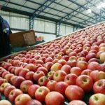 Importación de manzanas desde Chile creció un 500%