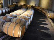 La ruta del vino: una opción para todo el año