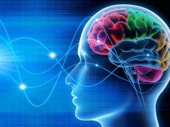 Neuromarketing: Las neuronas espejo y su papel en el marketing