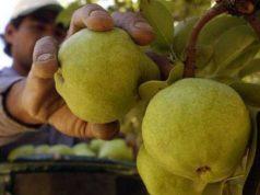 Brasil suspendió las importaciones a las peras y manzanas argentinas