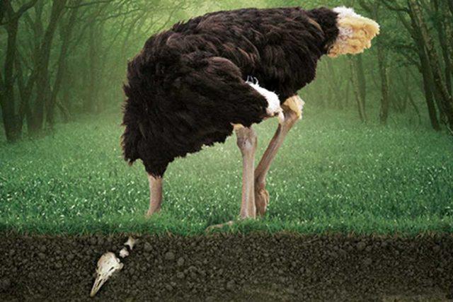 Por qué en la crisis del coronavirus las marcas no pueden esconder la cabeza como el avestruz
