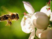 SADA impulsa acción colectiva por las abejas