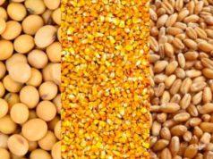 ¿Por qué invertir en soja, trigo y maíz en el 2021?