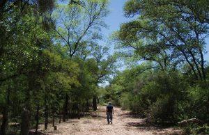 Empresarios, ONG y el gobierno analizaron el impacto económico y social de una gestión forestal sustentable